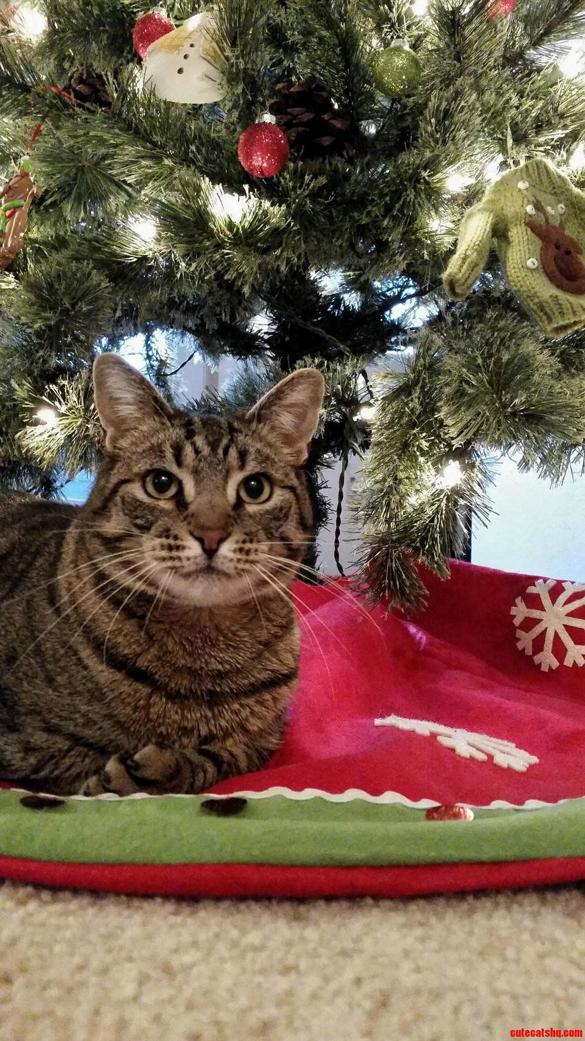 Dorito has really enjoyed sitting under the christmas tree and playing with the ornaments.
