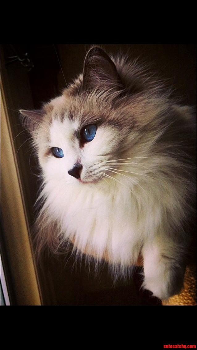 Everyone meet poco kitty vogue model-in-training