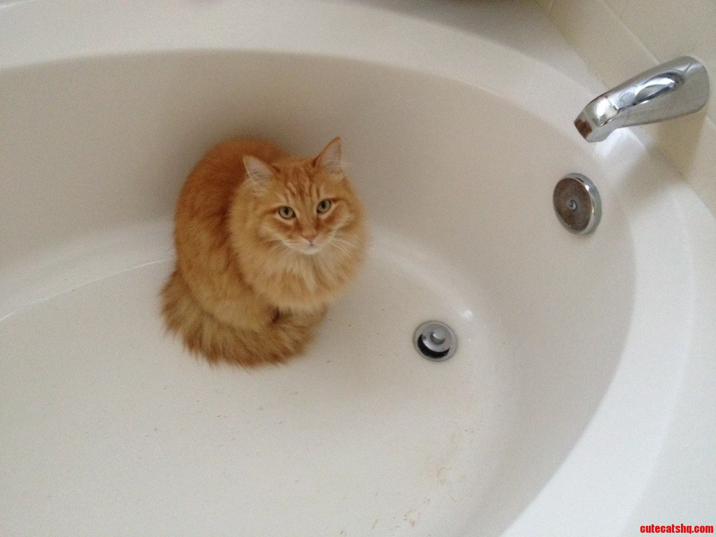 Garfield waiting patiently for some water.