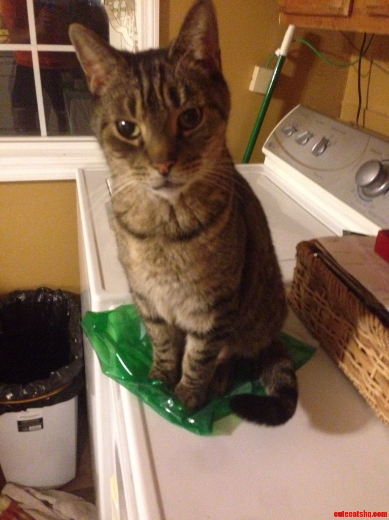 Green bag that my cat always sits on