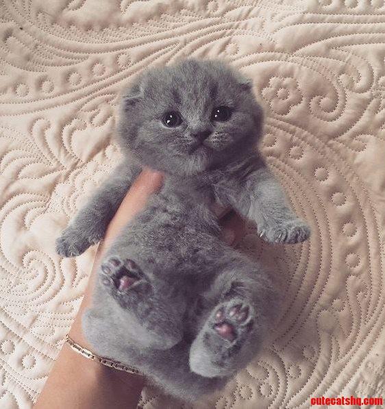 Look at his jellybeans
