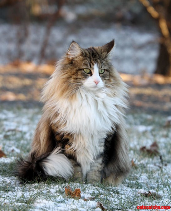 Look at this fluffy cat