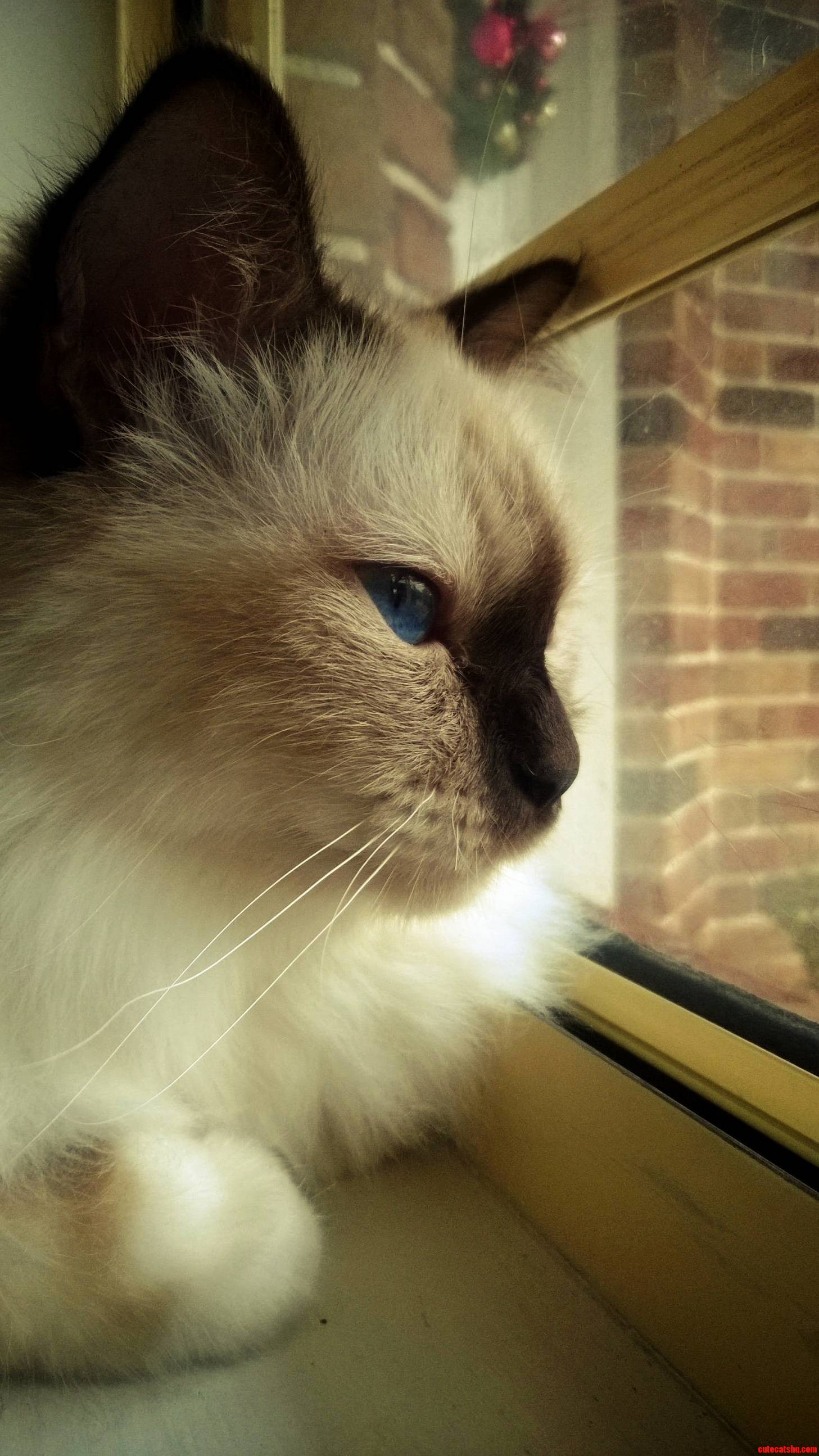 Milo watching the world go by on his birthday