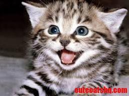 My cat in happy style