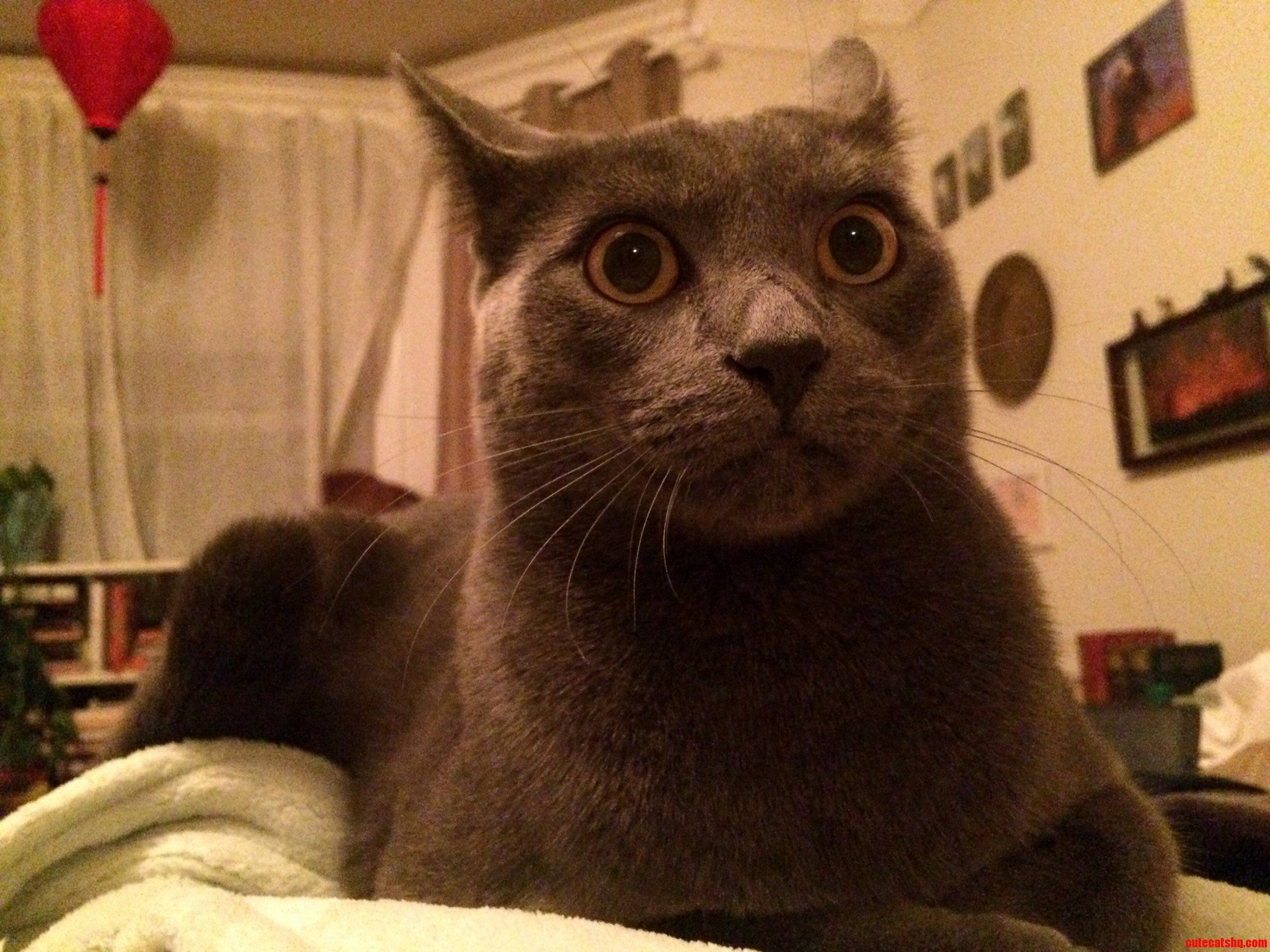 My cats face when new years eve fireworks began.
