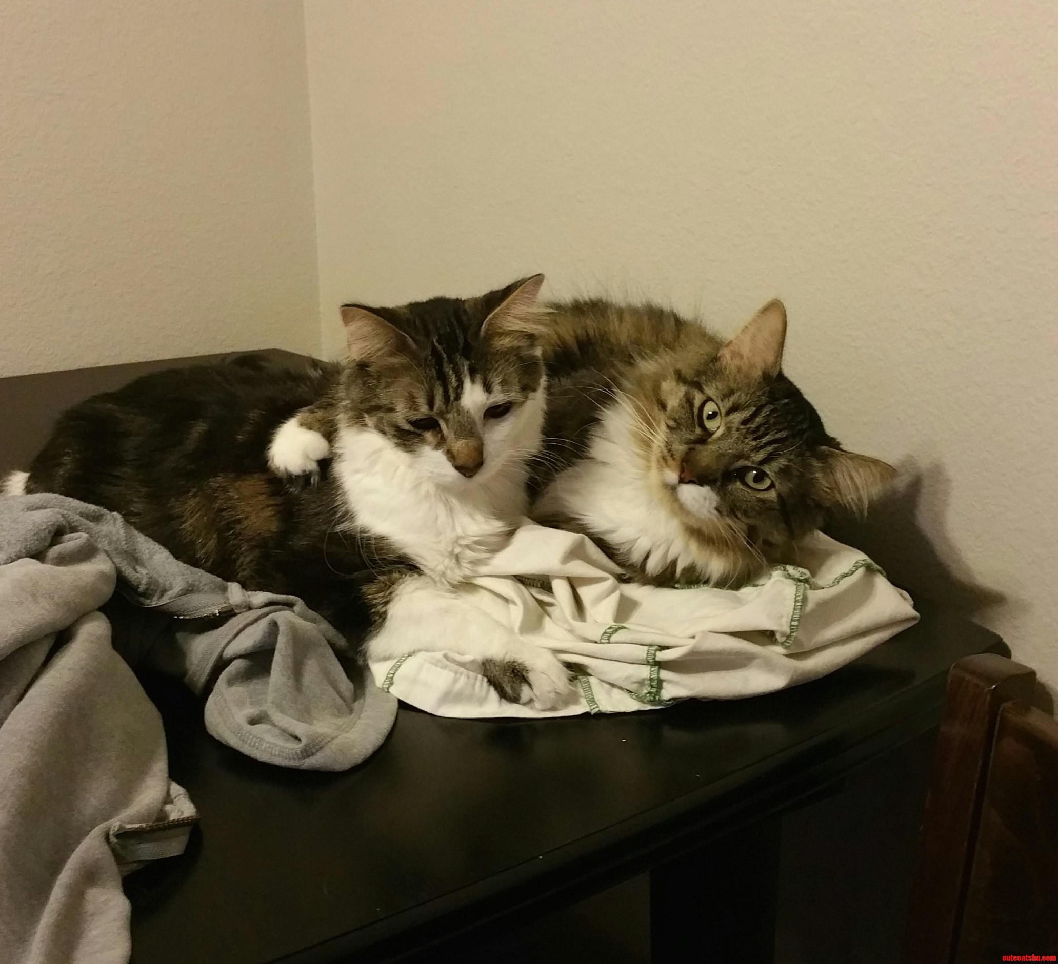 My cuddly kitties