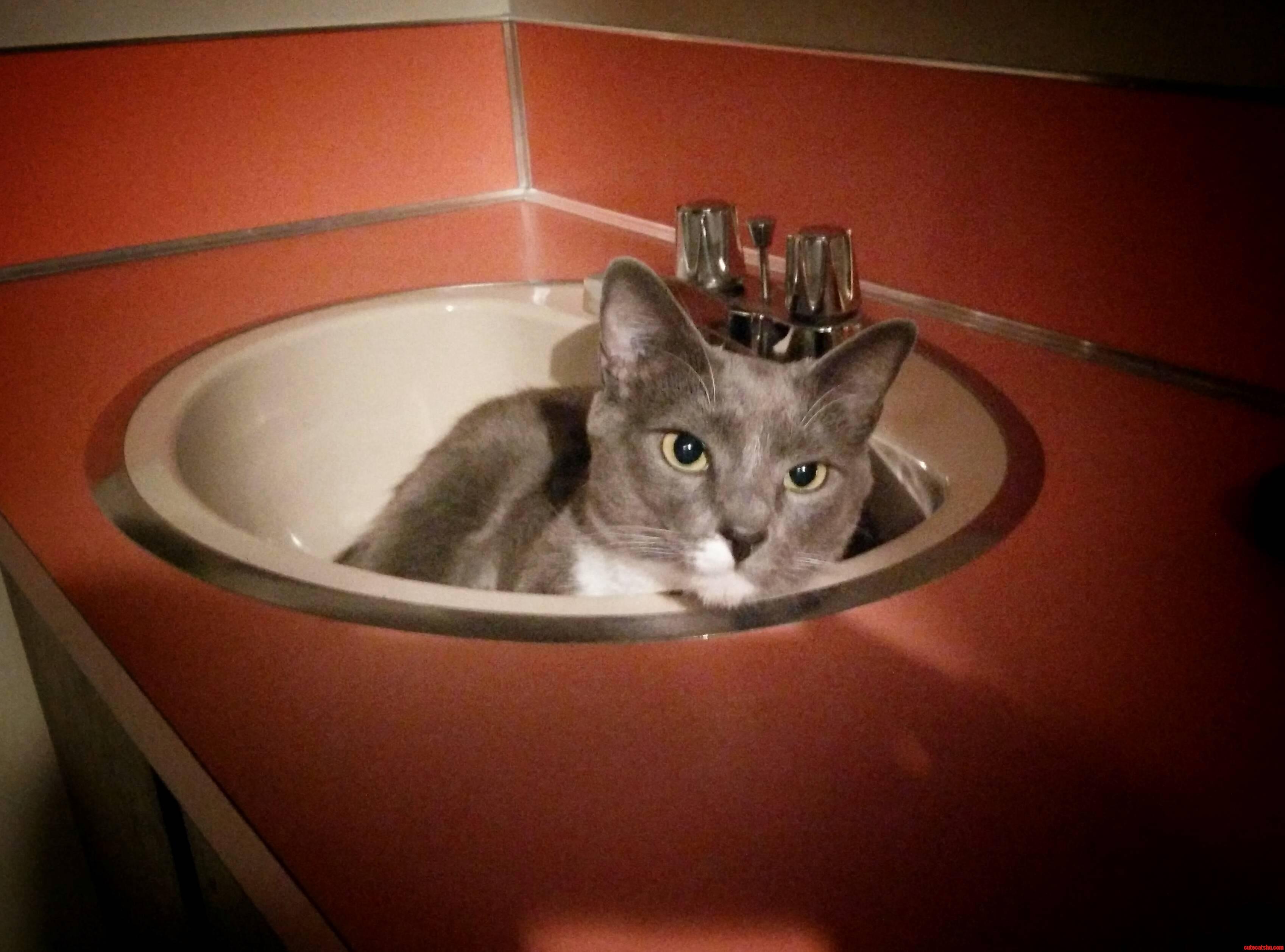 My friends cat likes sleeping in the bath sink