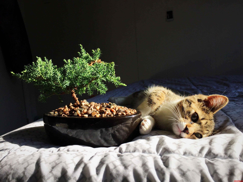 My kitty by a bonsai tree