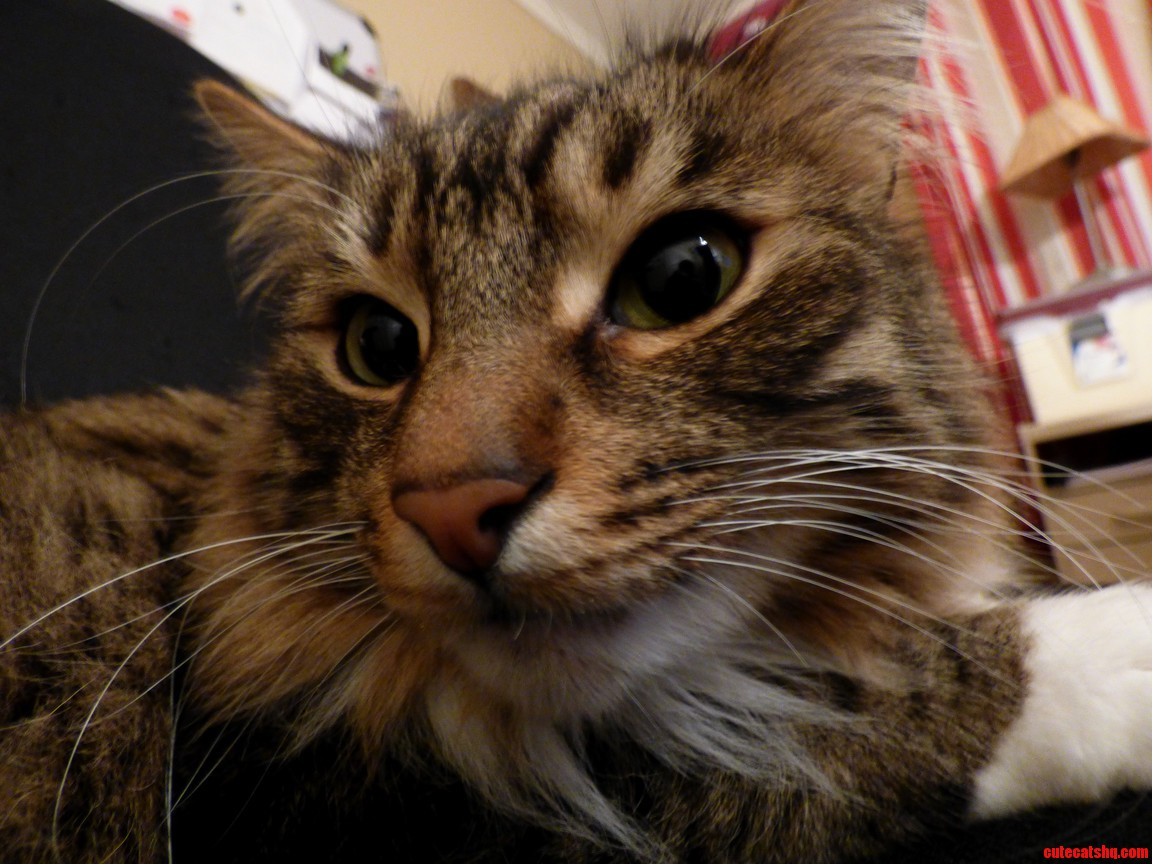 My kitty kat charlie