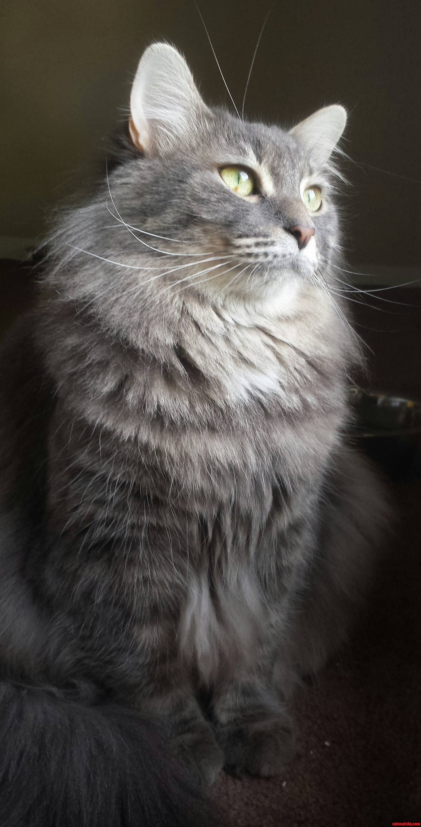 My majestic Fluffbutt
