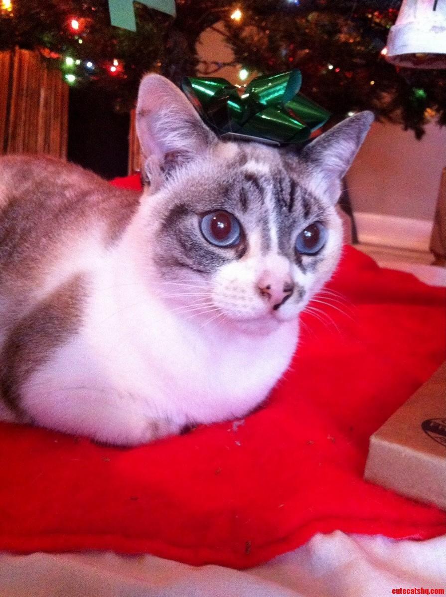 My pretty lady under the christmas tree