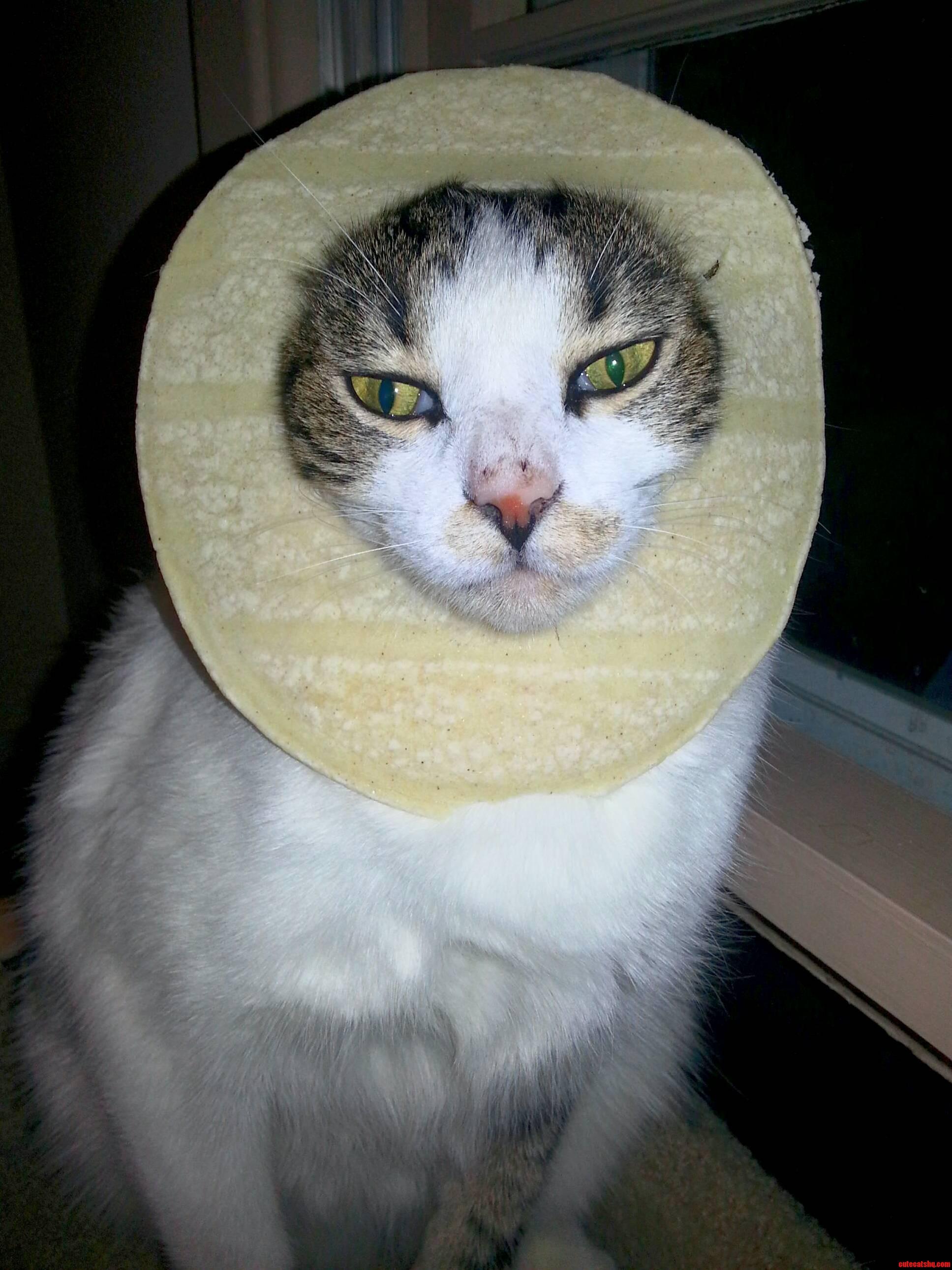 My taco cat.