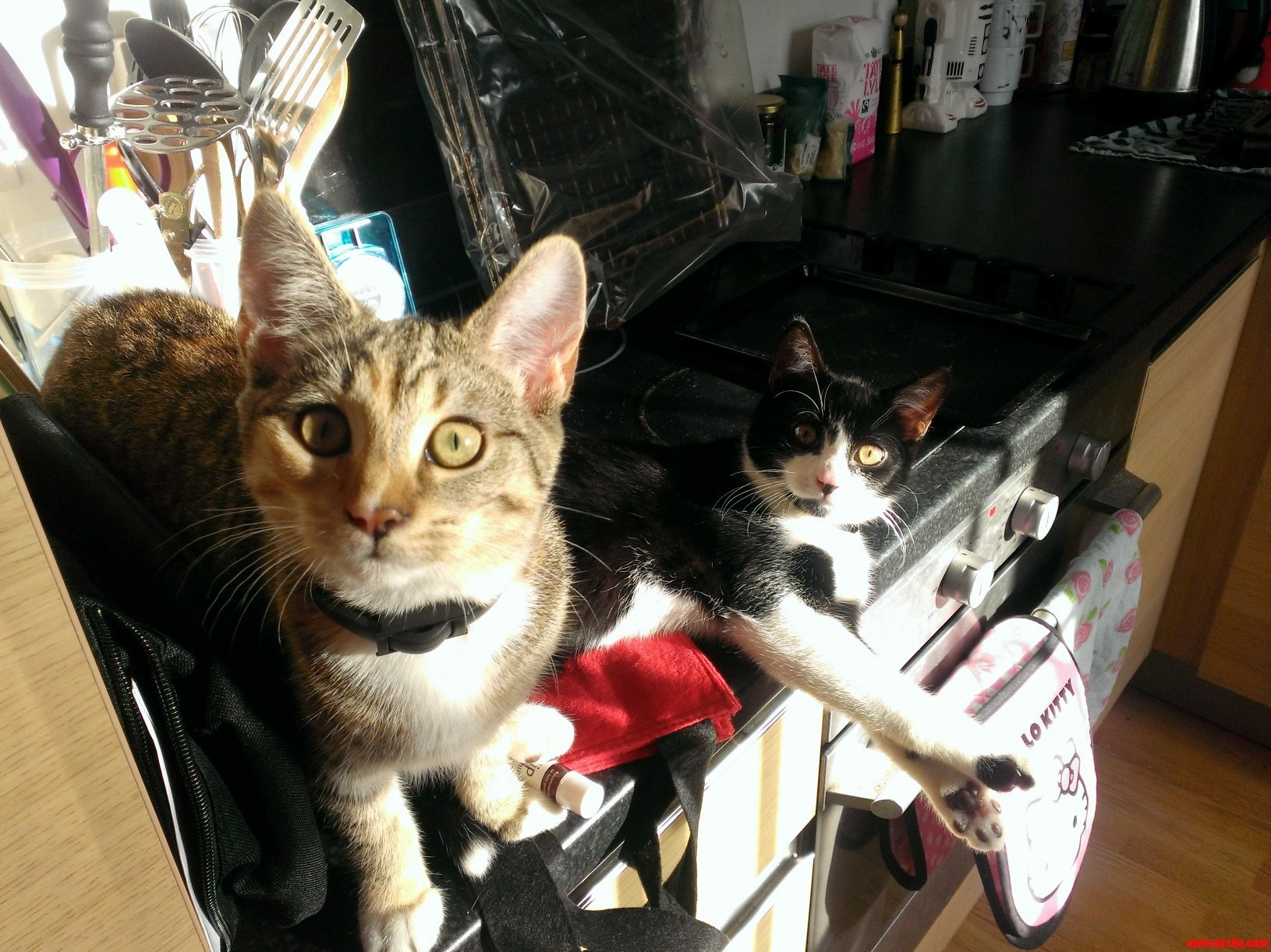 Nibbler and rocket soaking up some rays