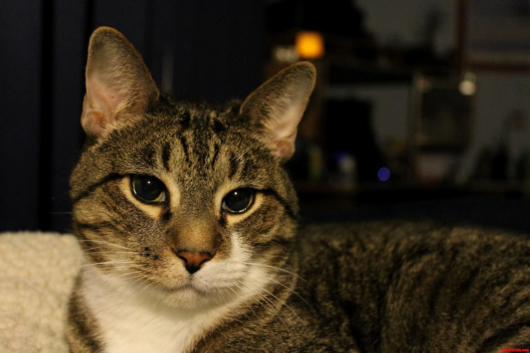 One of the first pictures i took with my first dslr was of our oldest dexter.