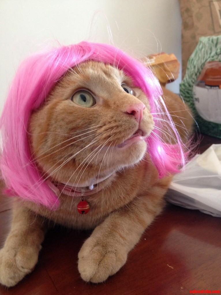 Buy Pink Wig Toronto 105
