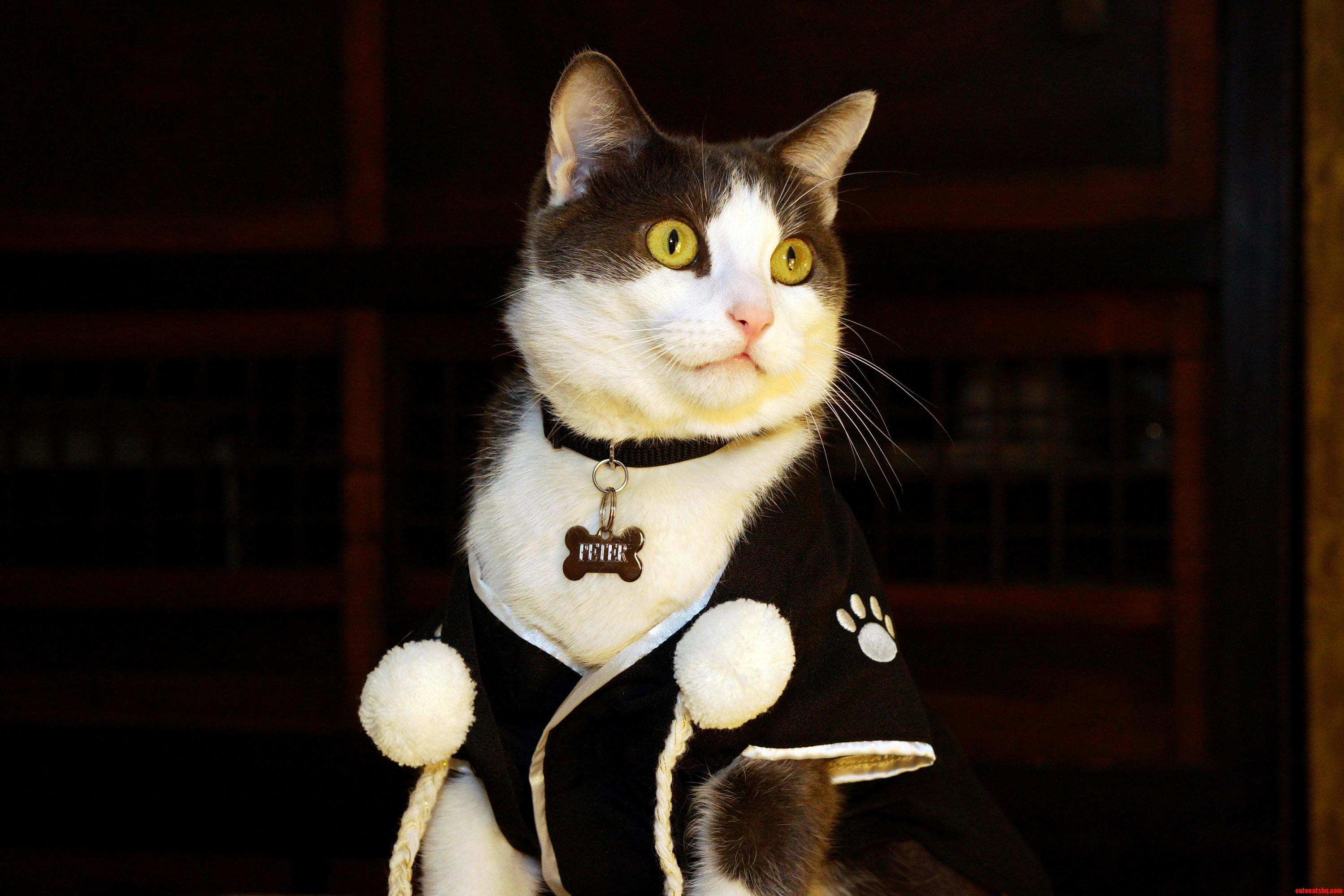 Samurai cat peter may kill us in our sleep for making him wear this