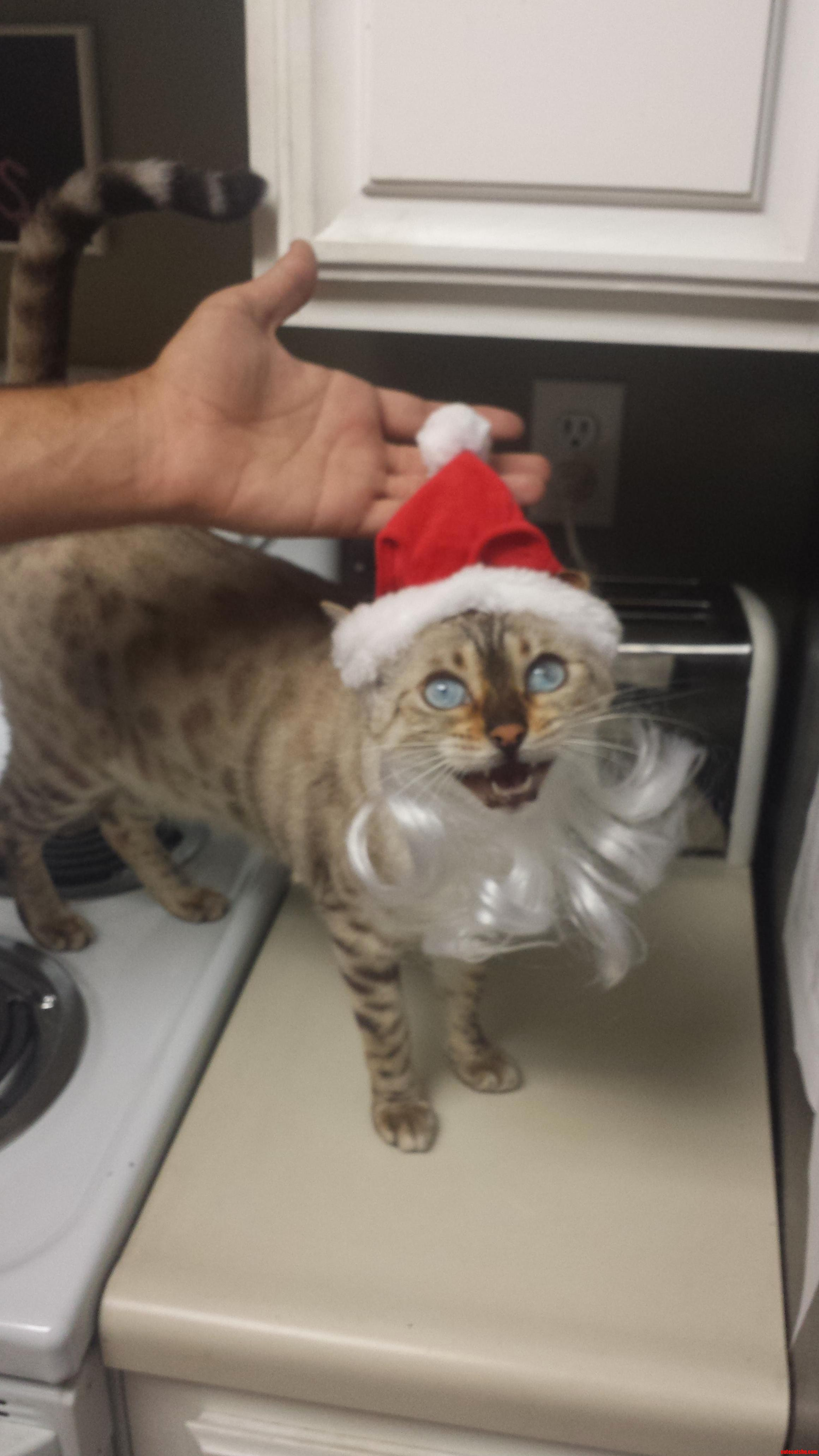 Sia wanted in on the holiday fun