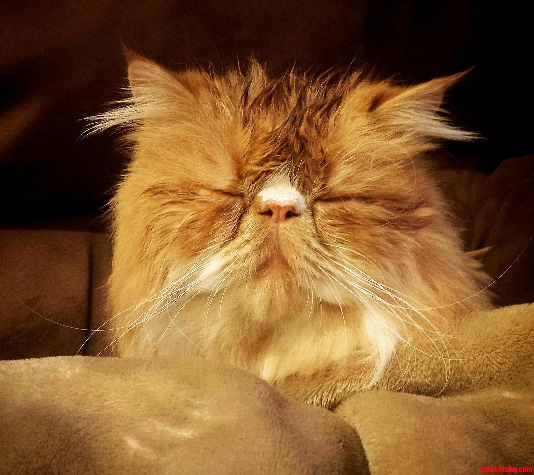 Snoozin after a bath