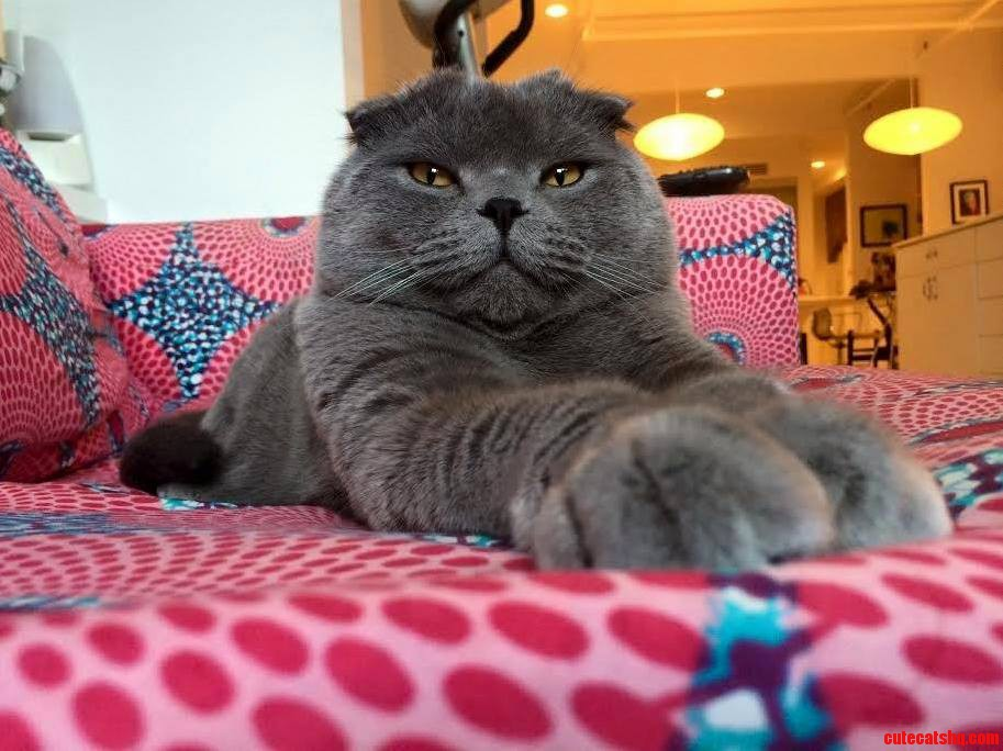 Super kitty evil genius d