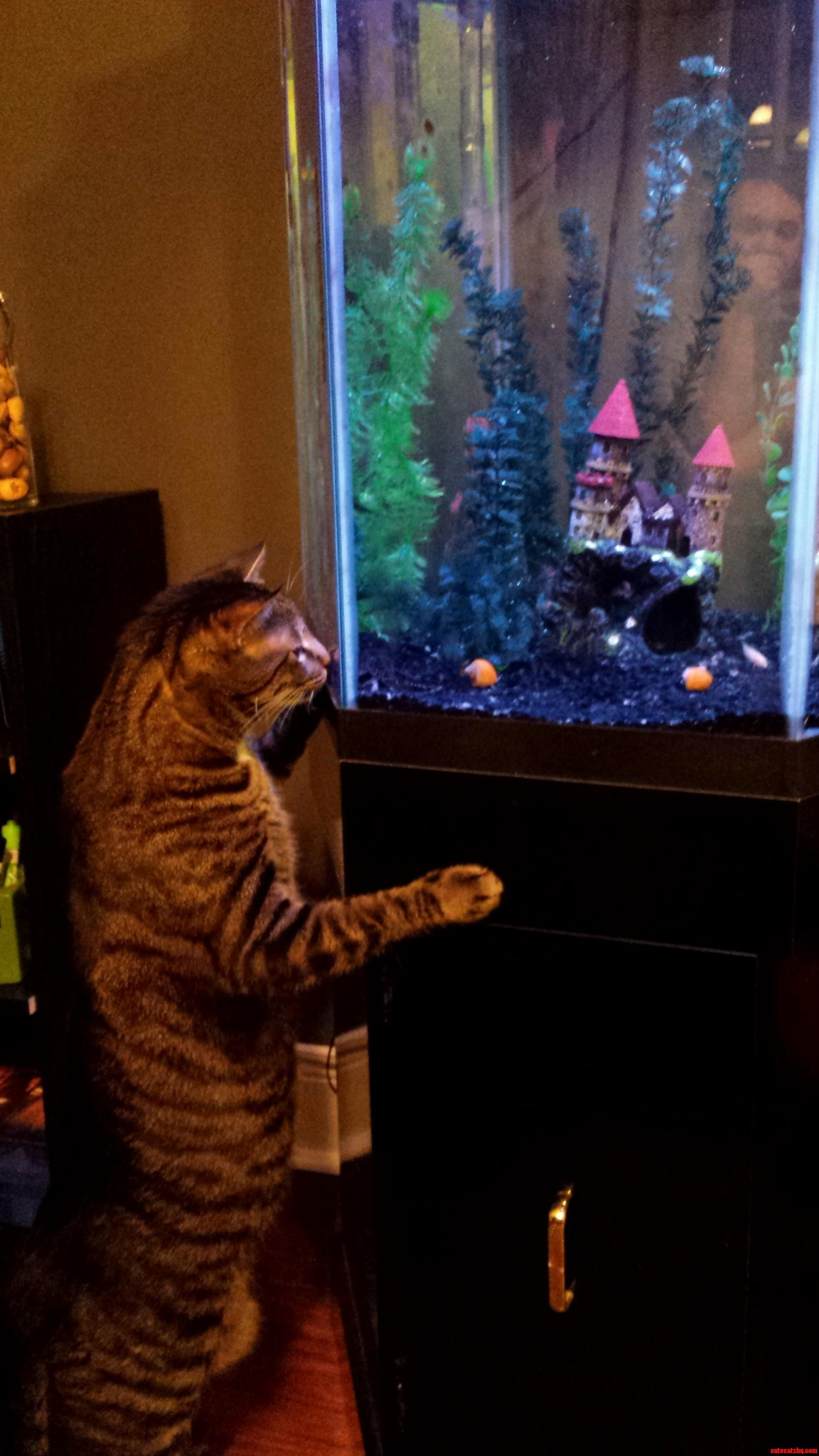 Calvyn is a big fan of our new fishies
