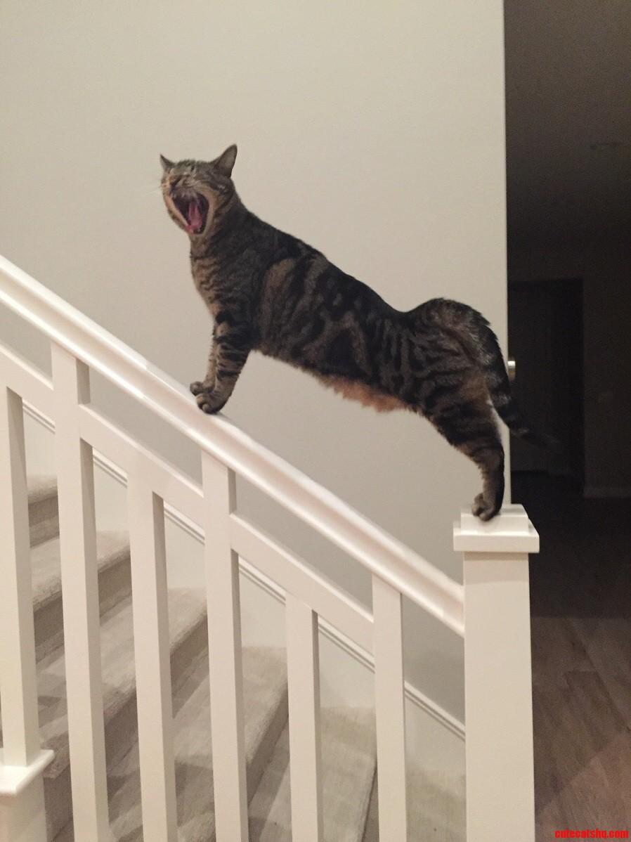 Cat Rawr