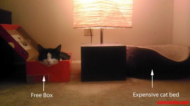 Cats expectation vs reality