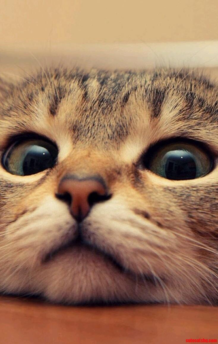 Cute kitty closeup