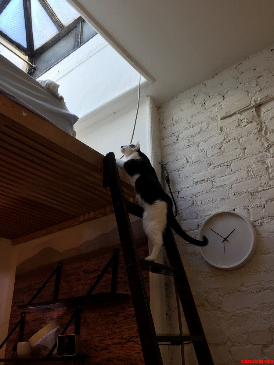Help how can i cat proof this ladder