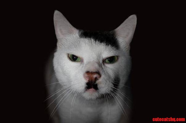 Hitler cat frowns upon your shenanigans