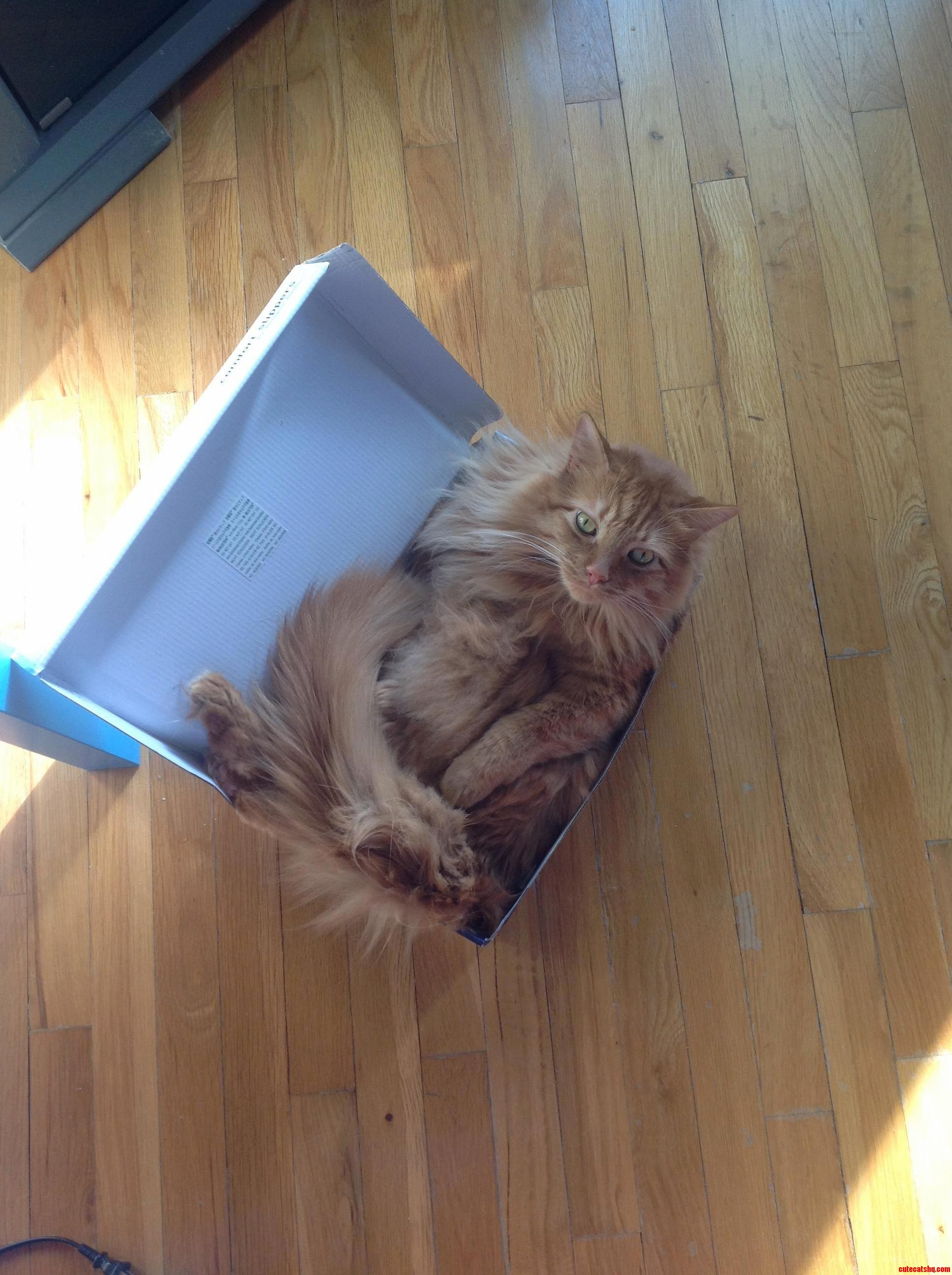 Hobbes really loves lying in his box