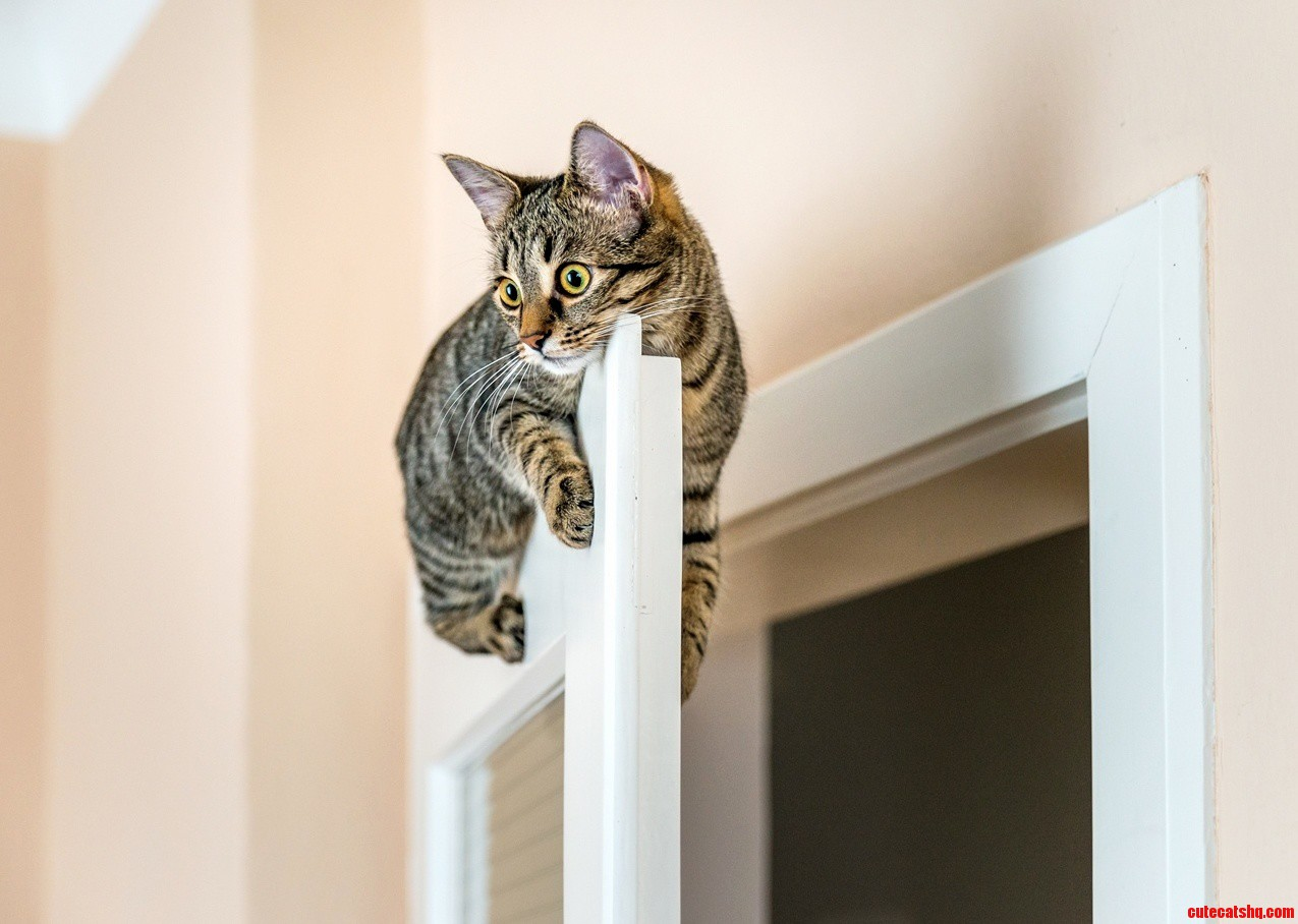 I came across this photo of a cat perched on a door.