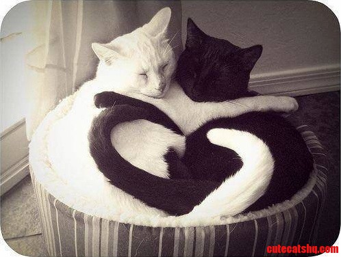 In honor of valentines day a repost of one of my favorite cuddly cat pictures