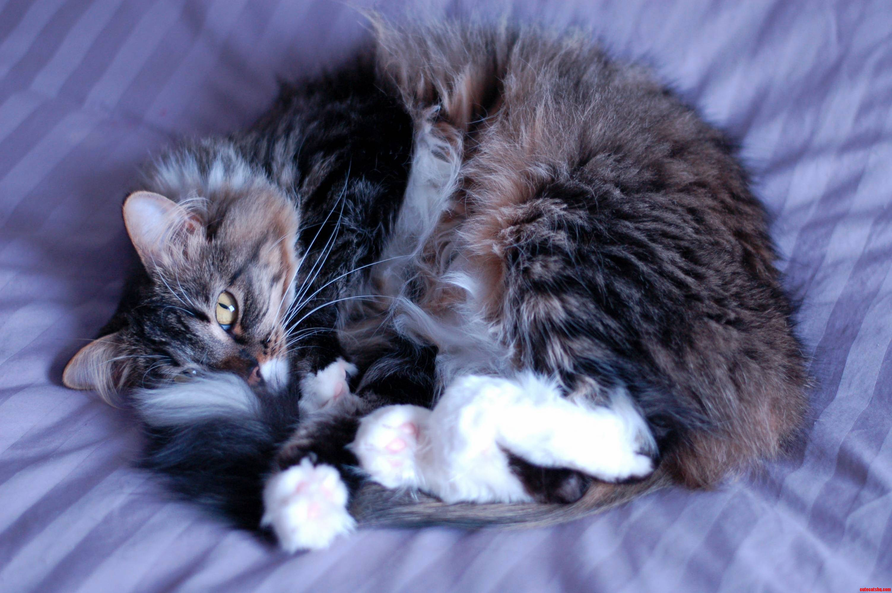 Irresistible snuggles