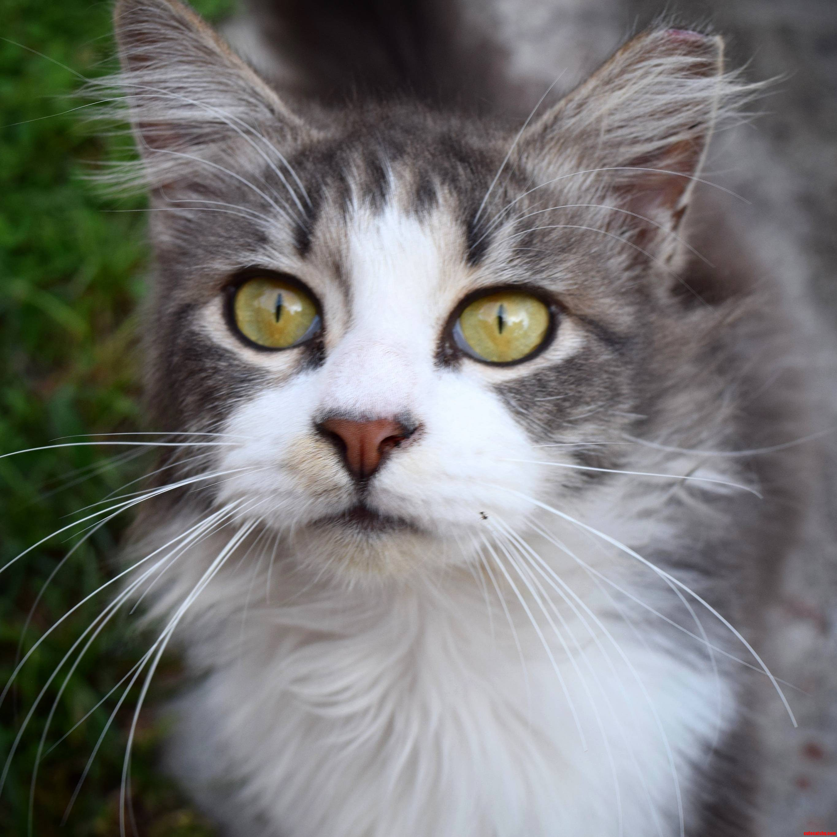 My beautiful furry friend.