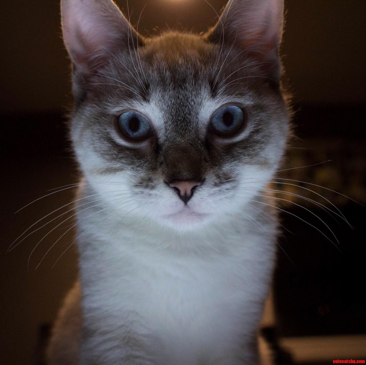 My boy Cosmo Kramer