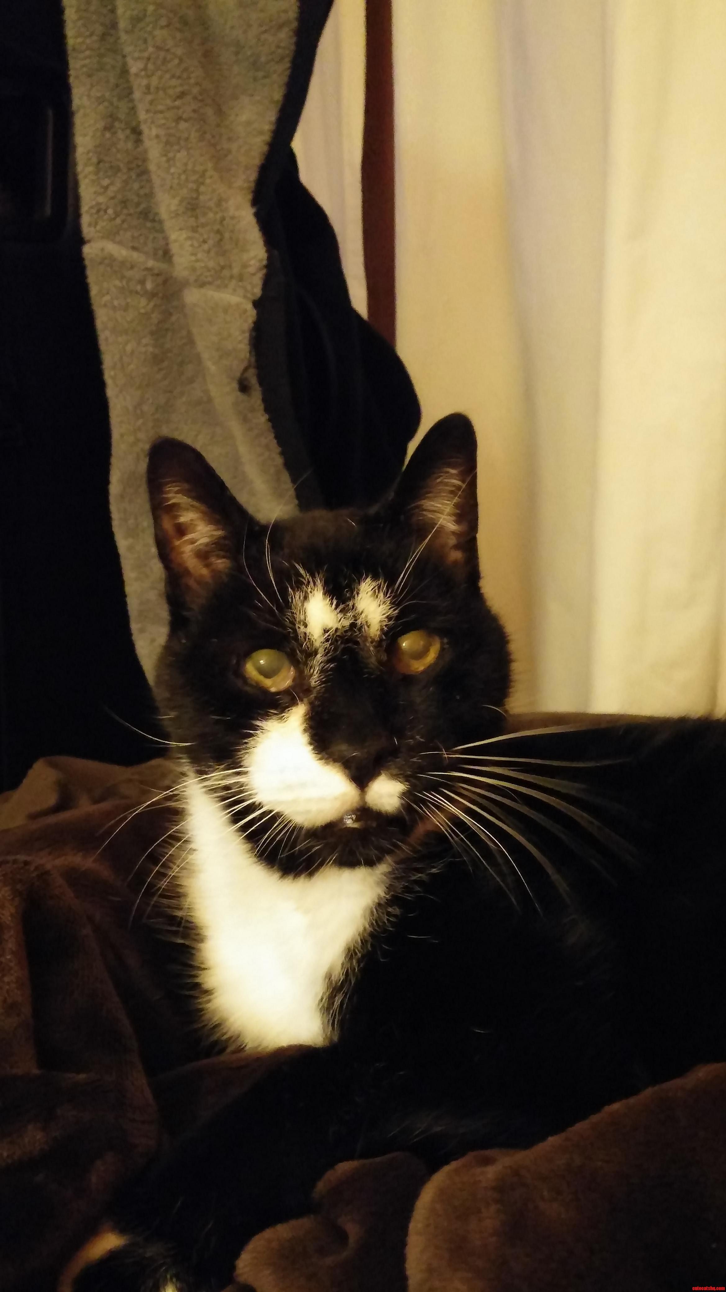 My boy milo. he just turned 15