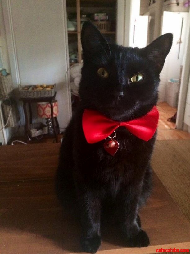 My cat donut dressed up for black friday