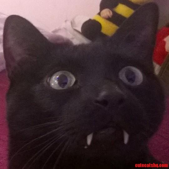 My friends cat is 3 feline and 97 vampire.