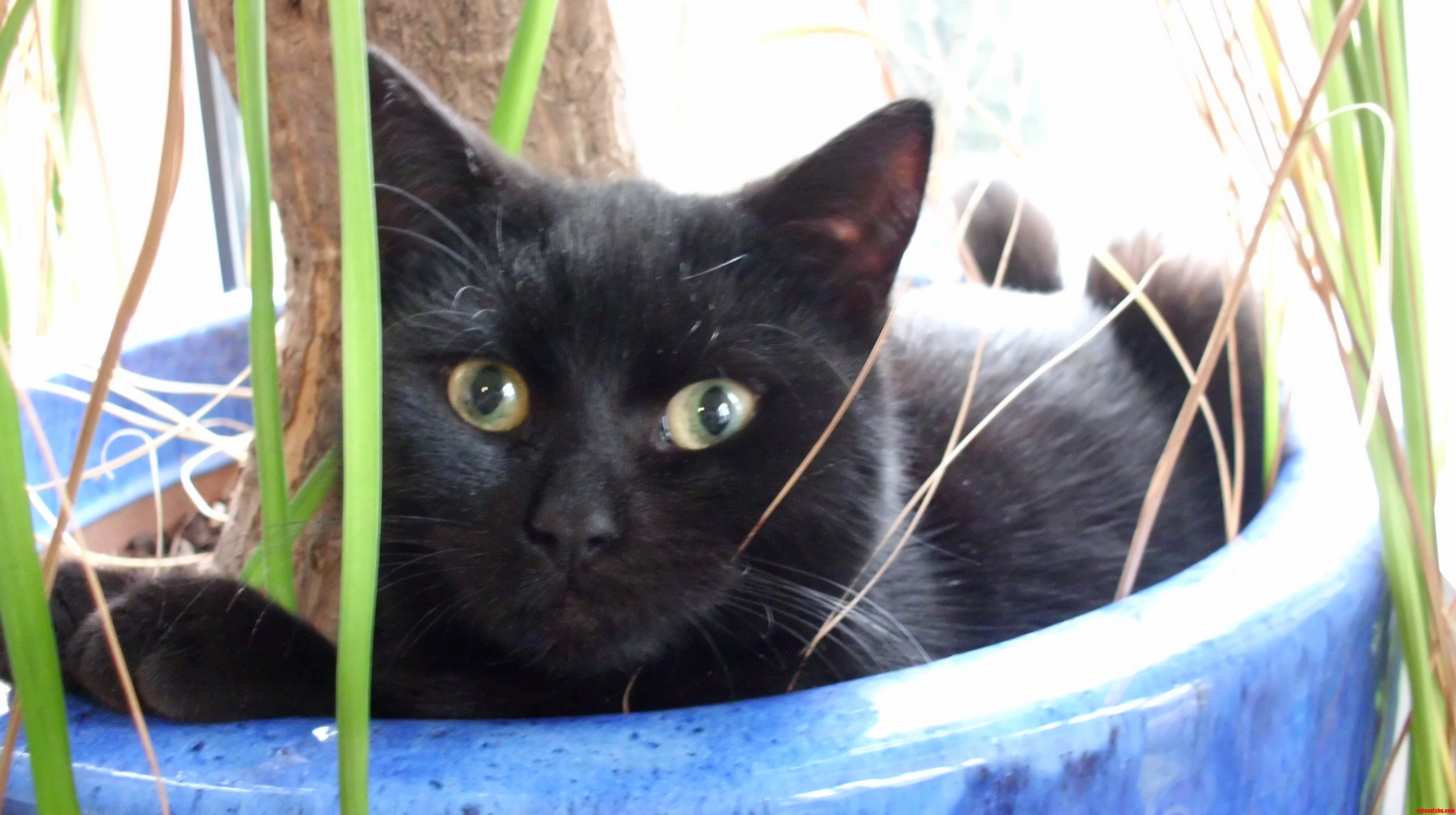 My plant feels much better now after its after-cat experience