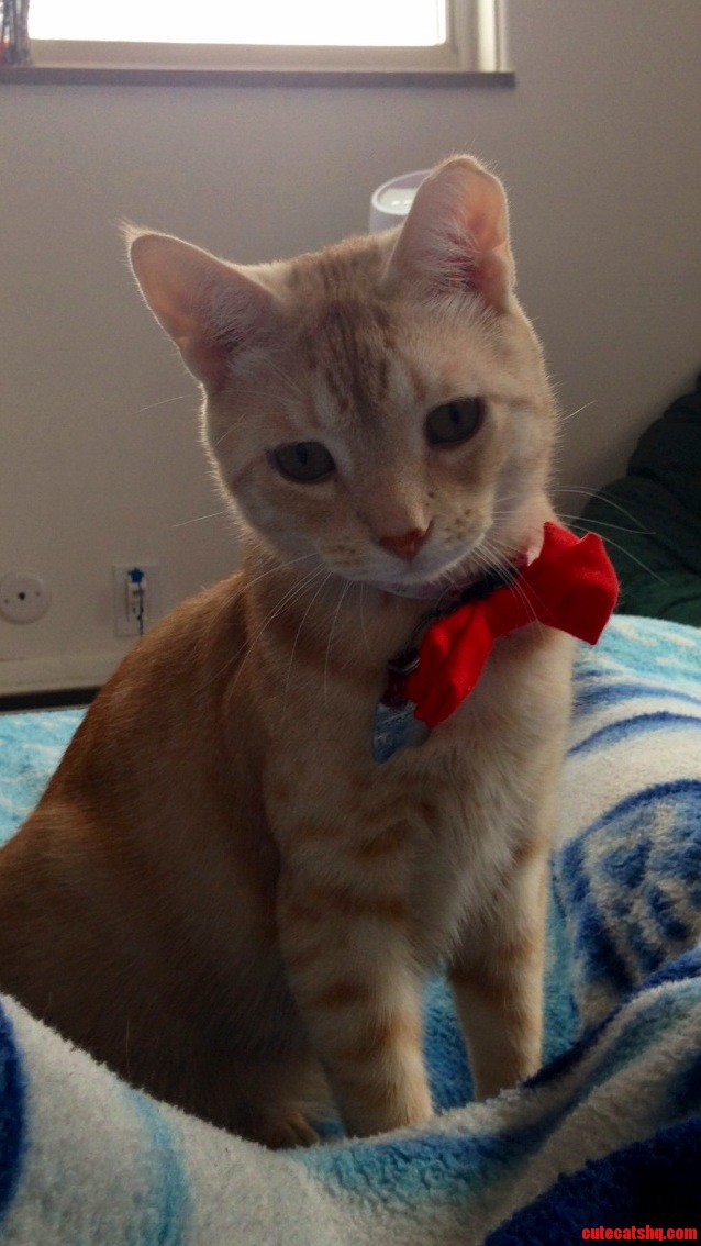Oliver is ready for valentines day