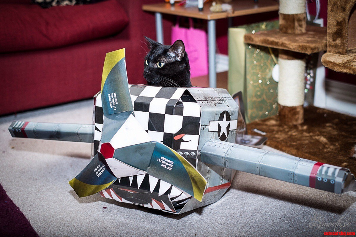 Our cat alan has his own plane