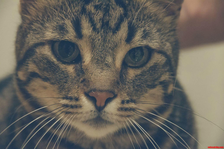 Our stray dorm kitten diablo