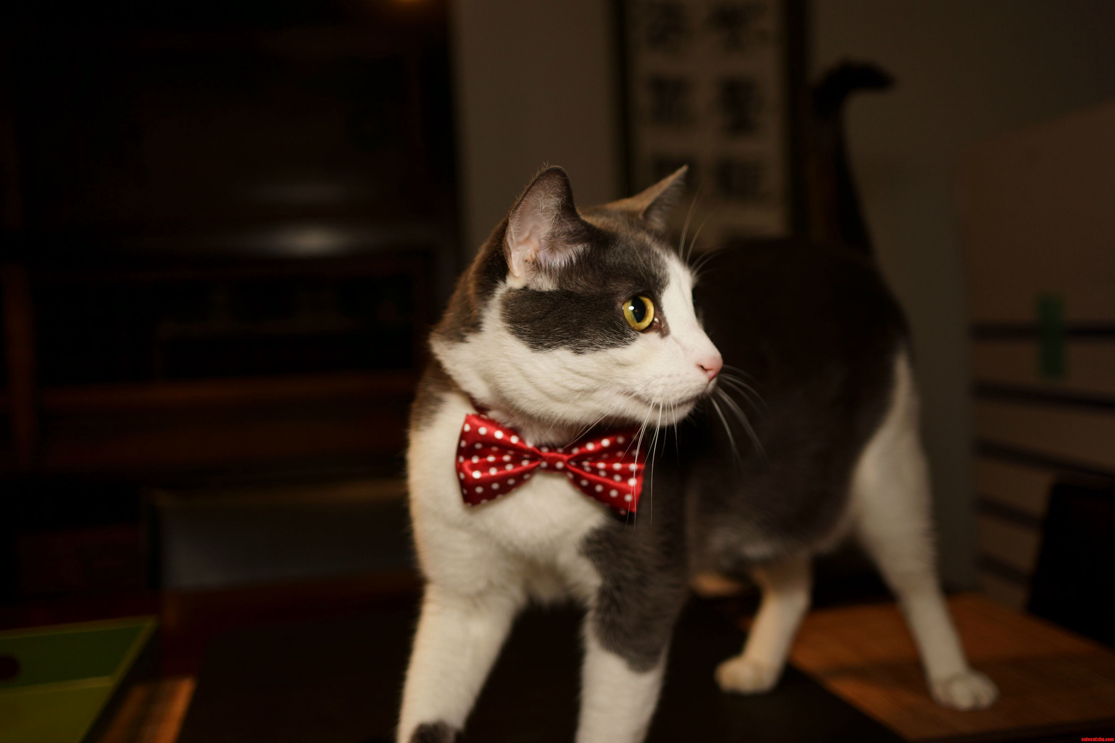 Peter is looking dapper in his valentines day bowtie