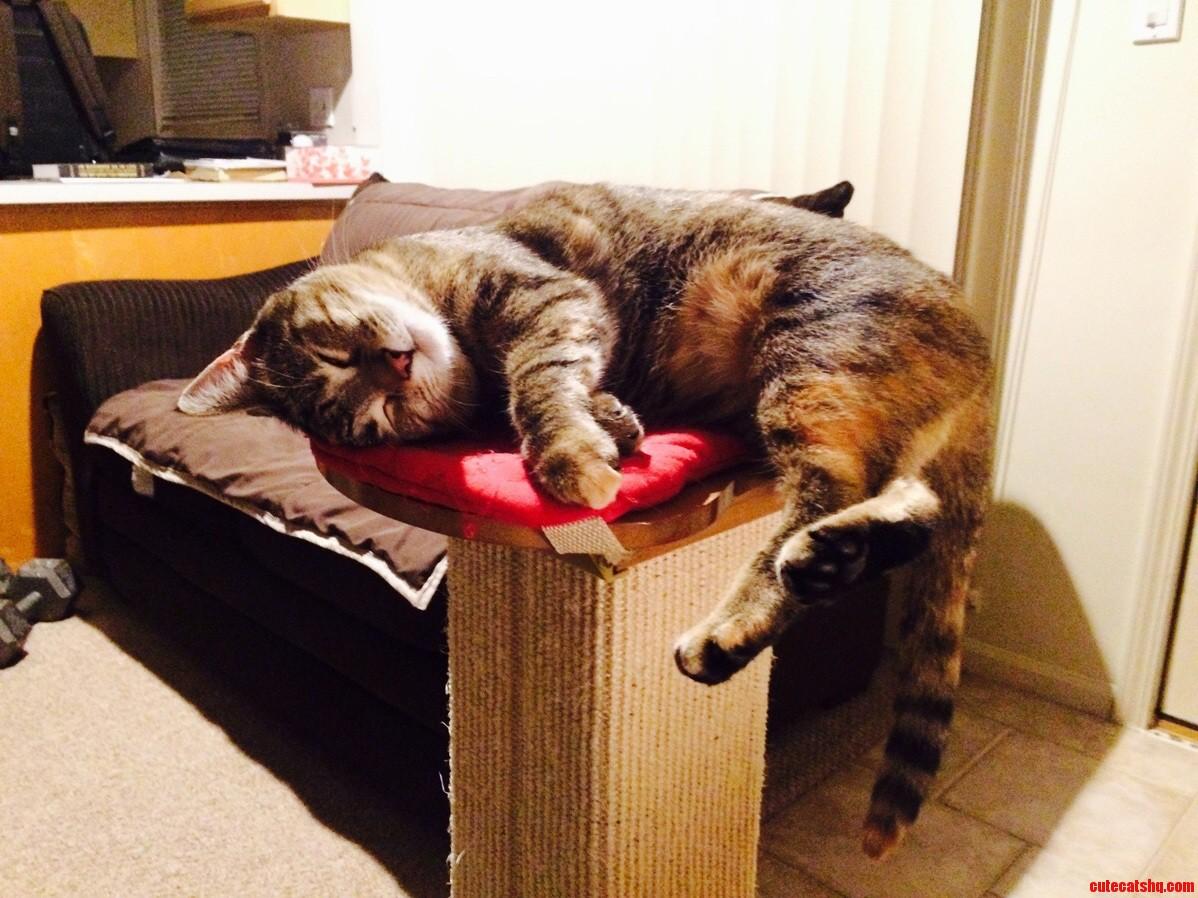 Rough kitty life.