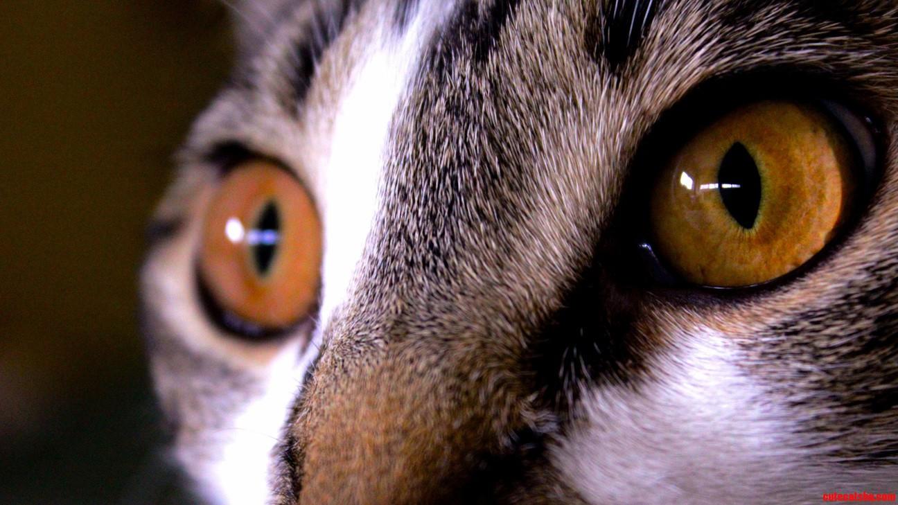 Sophies eyes