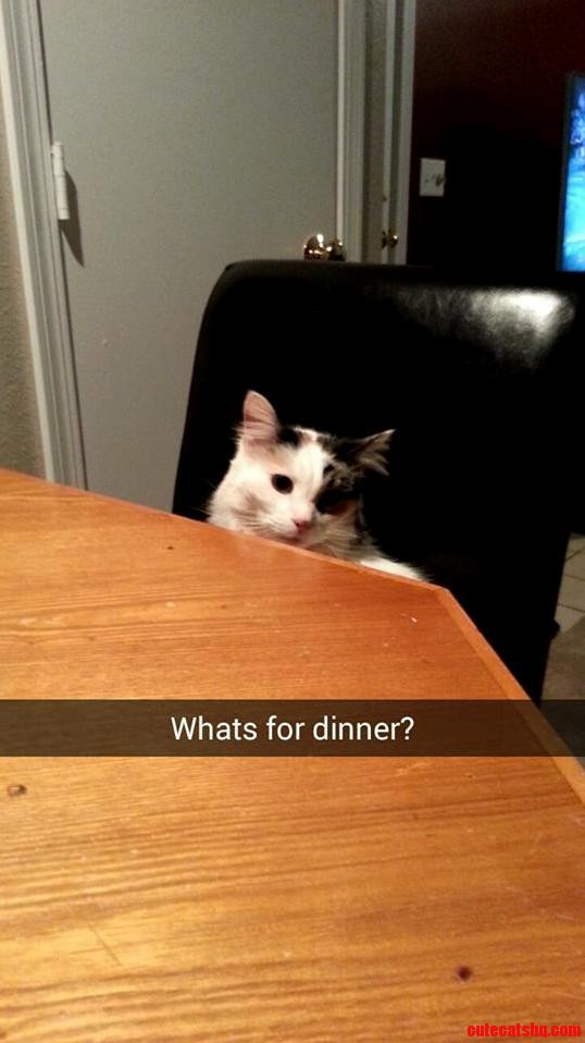 Zelda likes to sit at the table w me while i eat