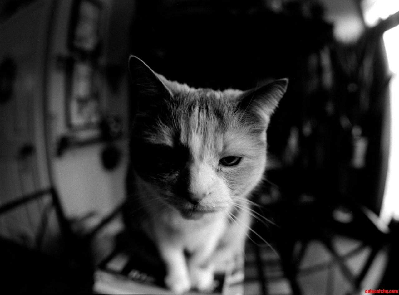 A cat called dizzy