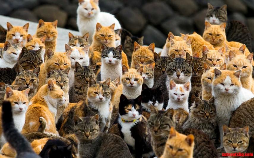 A crowd of cats on aoshima island japan.