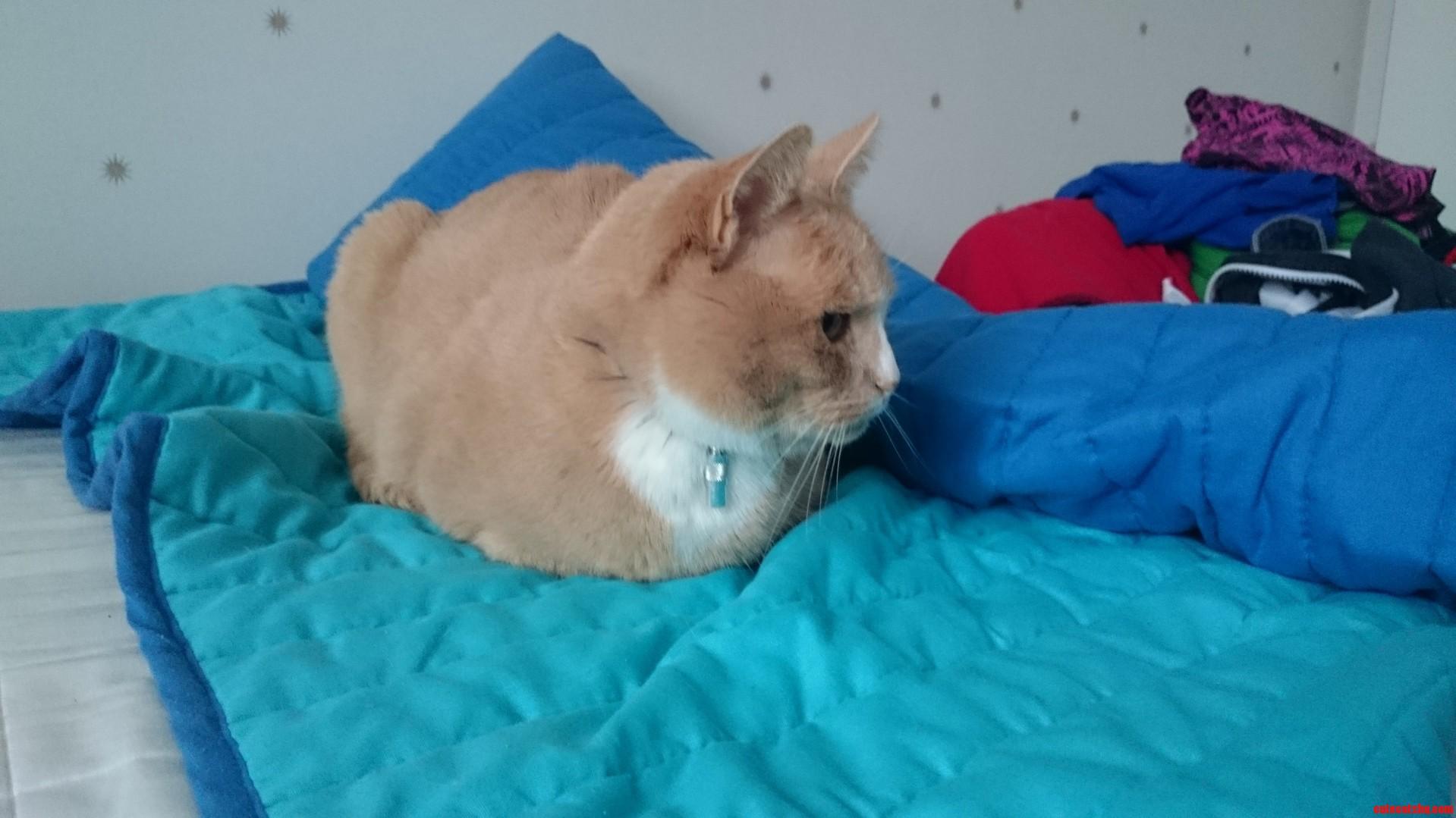 A ginger loaf