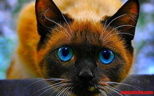 Another beauty – adorable eyes